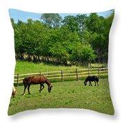 Ranch Daisies Throw Pillow
