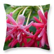 Rangoon Creeper Flower Throw Pillow