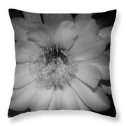Rapsody  Throw Pillow