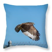 Raptor - 4 Throw Pillow