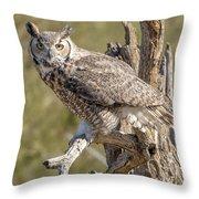 Raptor 14 Throw Pillow