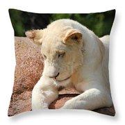 Rare Female White Lion Throw Pillow