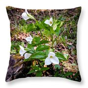 Rare Great White Trilliums Throw Pillow