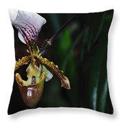 Rare Orchid - Paphiopedilum Gratrixianum Throw Pillow