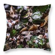 Rare Spring Beauty Throw Pillow