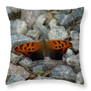 Rarely-sighted Butterfly Species Throw Pillow