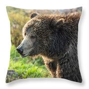 Raspberry At Dawn Throw Pillow