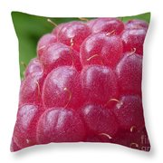 Raspberry Throw Pillow