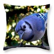 Raucous Throw Pillow