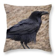 Raven Perched On A Ledge Throw Pillow