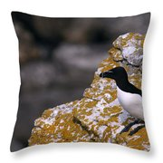 Razorbill Bird Throw Pillow