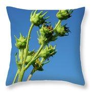 Reach Throw Pillow by Christi Kraft