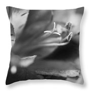 Reach Grey Limited Edition Throw Pillow