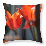 Reaching For Late Morning Sun Throw Pillow