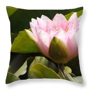 Reaching Lily Throw Pillow