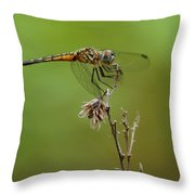 Ready For Lift-off  Throw Pillow