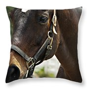 Ready For My Close Up Throw Pillow