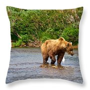 Ready To Pounce On A Salmon  In The Moraine River In Katmai National Preserve-ak Throw Pillow