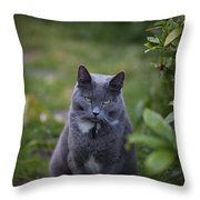 Really Now Throw Pillow