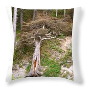 Rebirth On The Coast Throw Pillow