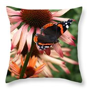 Red Admiral On Coneflower Throw Pillow