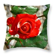 Red And Cream Rose Throw Pillow