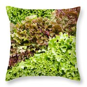 Red And Green Leaf Lettuce  Throw Pillow