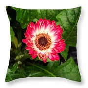 Red And White Gerber Daisy Throw Pillow