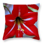Red And White Lilly Throw Pillow by Debra Forand