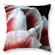 Red And White Tulip Closeup Throw Pillow