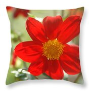 Red And Yellow Beauty Throw Pillow