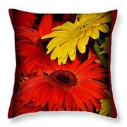 Red And Yellow Glory - The Flowers Of Summer - Gerbera Daisies Throw Pillow