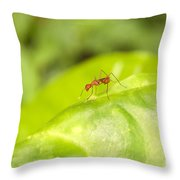 Red Ant On Green Leaf Throw Pillow
