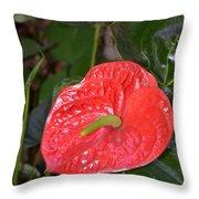 Red Anthurium Flower Throw Pillow