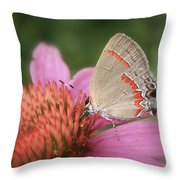 Red Banded Hairstreak Throw Pillow