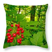 Red Baneberry Along Rivier Du Nord Trail In The Laurentians-qc Throw Pillow