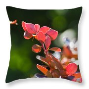 Red Barberry Throw Pillow