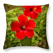 Red - Beautiful Hibiscus Flowers In Bloom On The Island Of Maui. Throw Pillow