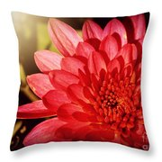 Red Beauty Welcomes The Sun - Flowers Of Summer Throw Pillow