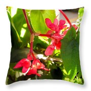 Red Begonia Peaking Through The Leaves Throw Pillow