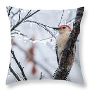 Red Bellied Woodpecker In Winter Throw Pillow