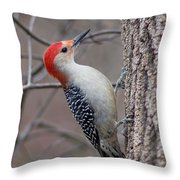 Red Bellied Woodpecker Pose Throw Pillow