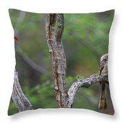 Red-billed Hornbills Throw Pillow