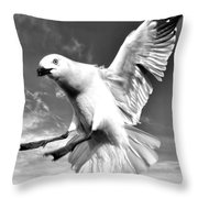 Red Billed Seagull In Black And White Throw Pillow