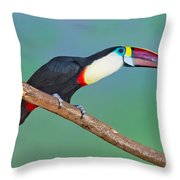 Red-billed Toucan Throw Pillow