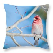 Red Bird Blue Sky Warm Sun Throw Pillow