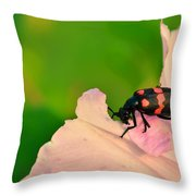 Red Blister Beetle Throw Pillow