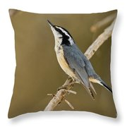 Red-breasted Nuthatch Pictures 76 Throw Pillow