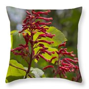 Red Buckeye - Aesculus Pavia - Wildflowers Throw Pillow