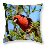 Red Cardinal In Springtime Throw Pillow